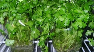 Tips on Greens Preservation - Indian Andhra Telugu Cooking