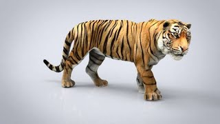 How to view 3D Animals in Google | Google's 3D Animals | AR Feature Supporting Mobile|List 3D Animal
