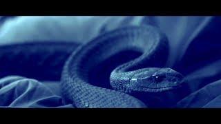 SERPENT (2017) Official Trailer (HD) KILLER SNAKE