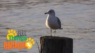 SEAGULLS | Animals for children. Kids videos. Kindergarten | Preschool learning
