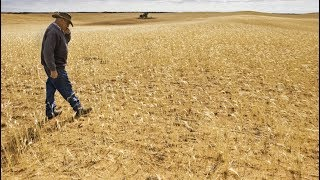 How Climate Change will Reduce Crop Yields and Spike Food Prices