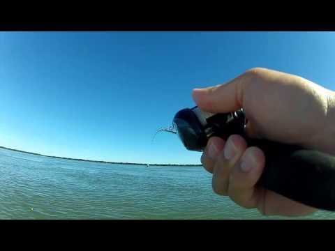 Técnica de pescar Piaparas na rodadinha