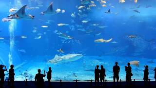 Full HD 1080p - Okinawa Churaumi Aquarium