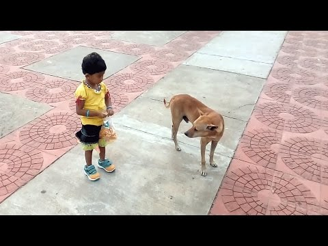 Small girl happily playing with street dog!