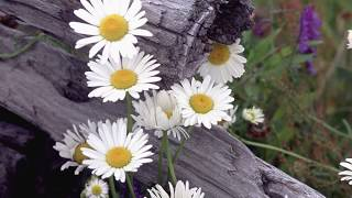 """Peaceful Music, Relaxing Music, Instrumental Music """"Beautiful World Canada"""" by Tim Janis"""