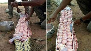 Nigerian villagers kill one of the  world's largest Giant Snake !!