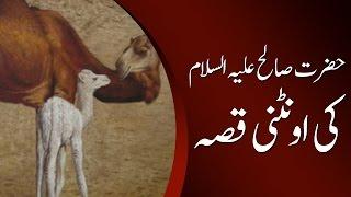Hazrat Saleh Alaihi Salam Ki Uthni Ka Waqiya