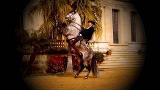 [EQUESTRIAN] Live like tomorrow doesn't exist