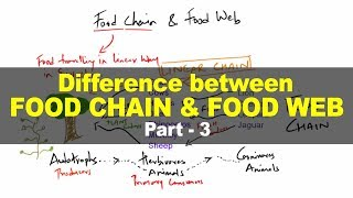 Difference between Food Chain & Food Web - Environment and Ecology for UPSC IAS Part 3