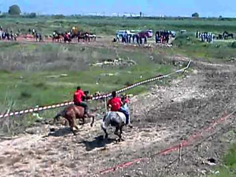 Horse Racing tradicionalna trka na konji gurgovden vasilevo