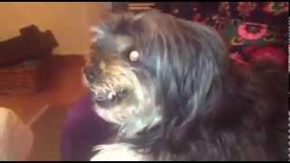 كلب كلما يسمع أسم أي لاعب من برشلونة يتحول وجهه إلى مصاص دماء