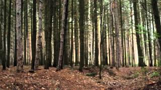 Pânico na floresta 6 original