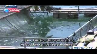 Futuristic Fish Farming Nobeoka japan tour