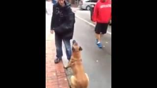 شاهد وفاء كلب لصاحبه عجيييب