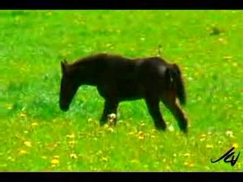 Horse lovers - the foals are beautiful!