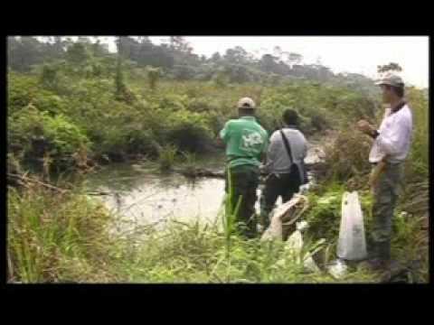 Ikan Terhandal Haruan part 4 .flv