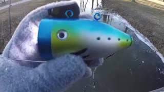 UnderWater Fish Camera : Fish Viewer