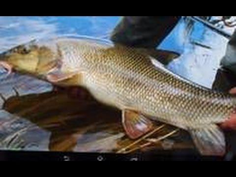 рыбалка на каспийского усача