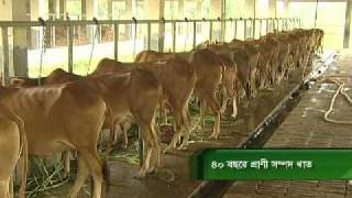 News report 14- State of agriculture in Bangladesh in forty years (Livestock sector)