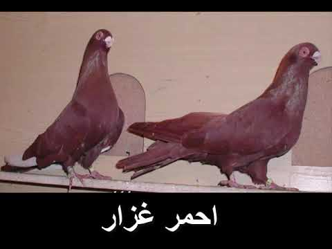 جميع انواع ; حمام الزينه في مصر2018