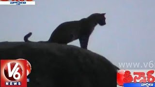 Leopard roaming in Nizamabad -Teenmaar News