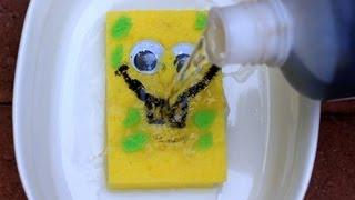Sulfuric Acid vs Sponge - Chemical Reaction