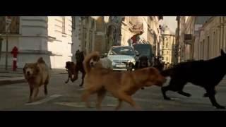 كلب مجرى وكلب بلدى