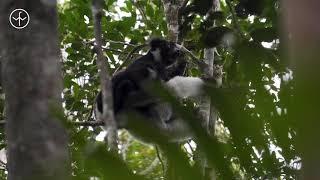 Travel Guide to Madagascar