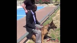 كلب بوليسي مدرب بشكل رهيب على حماية البشر من الهجمات بالسلاح لن تصدق البراعة في التدريب