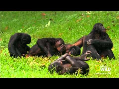 Monos cachondos