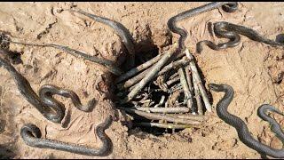 Amazing Deep Hole Snake Trap - Smart Boys Catch Snake Using Deep Hole Snake Trap