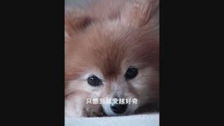 側田 Dream Away (Photo edited) + Lyrics