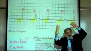 CARDIAC PHYSIOLOGY; PART 3 by Professor Fink.wmv