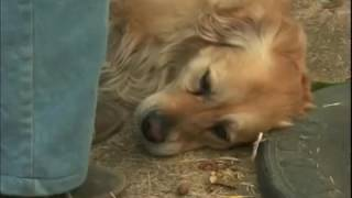 the pets , Hd Tamil Dubbed Movie Hollywood Tamil Movie Pets