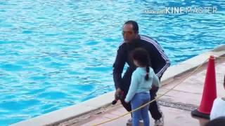 عرض الدولفين في شرم الشيخ Dolphin show
