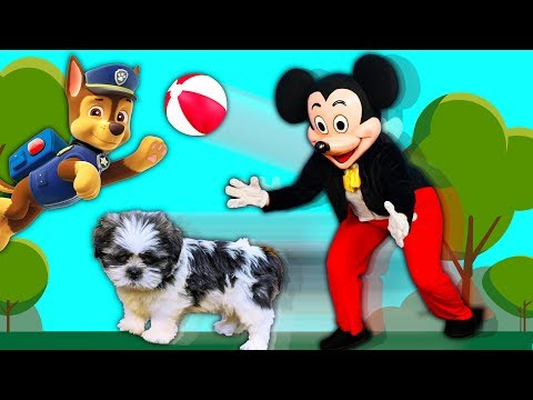 Xxx Mp4 The Adventures Of Wiggles And Mickey Mouse And A Cow At The Dog Park 3gp Sex