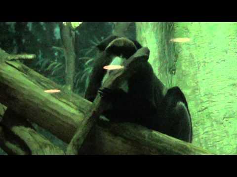 Monkey Loves To Lick Ummm Stick?