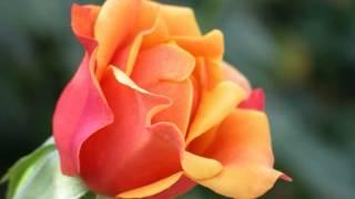 Zindagi Ki Talash Mein [Full Song] (HD) With Lyrics - Saathi