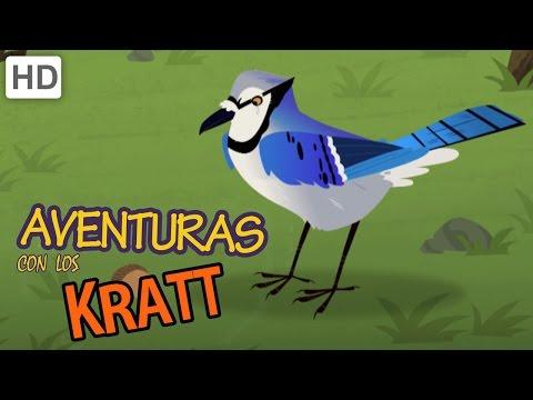 Aventuras con los Kratt Compilación de Criaturas Voladoras