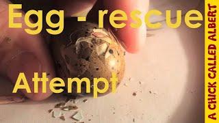 Do not help a hatching egg.