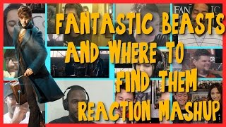 Fantastic Beasts and Where to Find Them - Teaser Trailer - Reactions Mashup