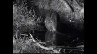 BBC Winterwatch 2013 - Episode 1