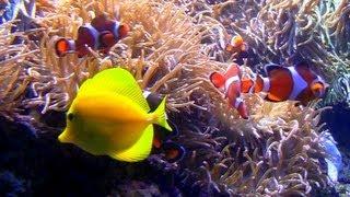 Aquarium with Natural Wave Sounds 60mins