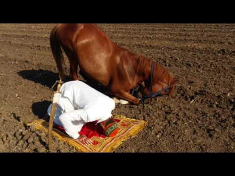 Xxx Mp4 Horse Is Praying Namaz 3gp Sex