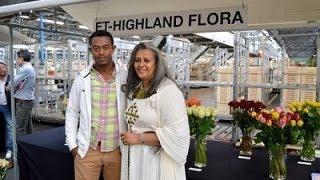 ET-Highland Flora PLC: flourishing horticulture sector in Ethiopia