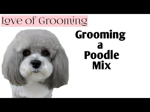Grooming a Poodle Mix