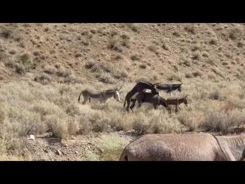 Xxx Mp4 Death Valley Wild Burros 3gp Sex