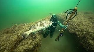 Spearfishing for GIANT Grouper In Ocean!! (Dangerous shot)