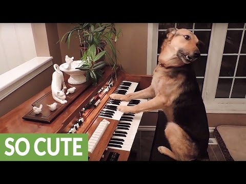 This compilation of smart dogs will