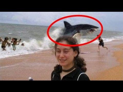 5 Pessoas que Sobreviveram a Ataques de Tubarão